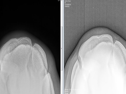 Simple ways to improve your equine X-Ray (3)