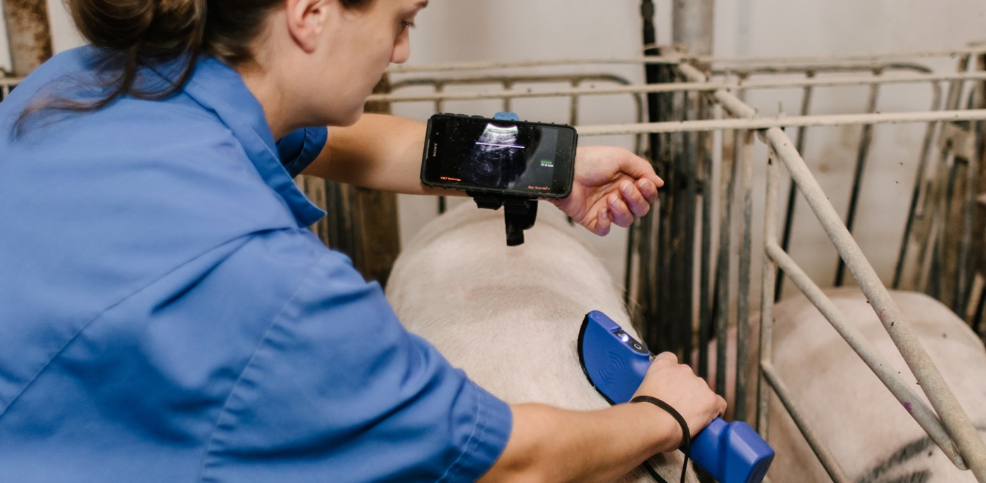 Wireless pig ultrasound Duo-Scan:Go Plus crate use
