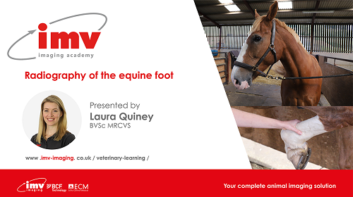 webinar radiography of the equine foot