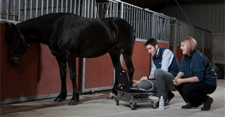 equine.dental.2-min